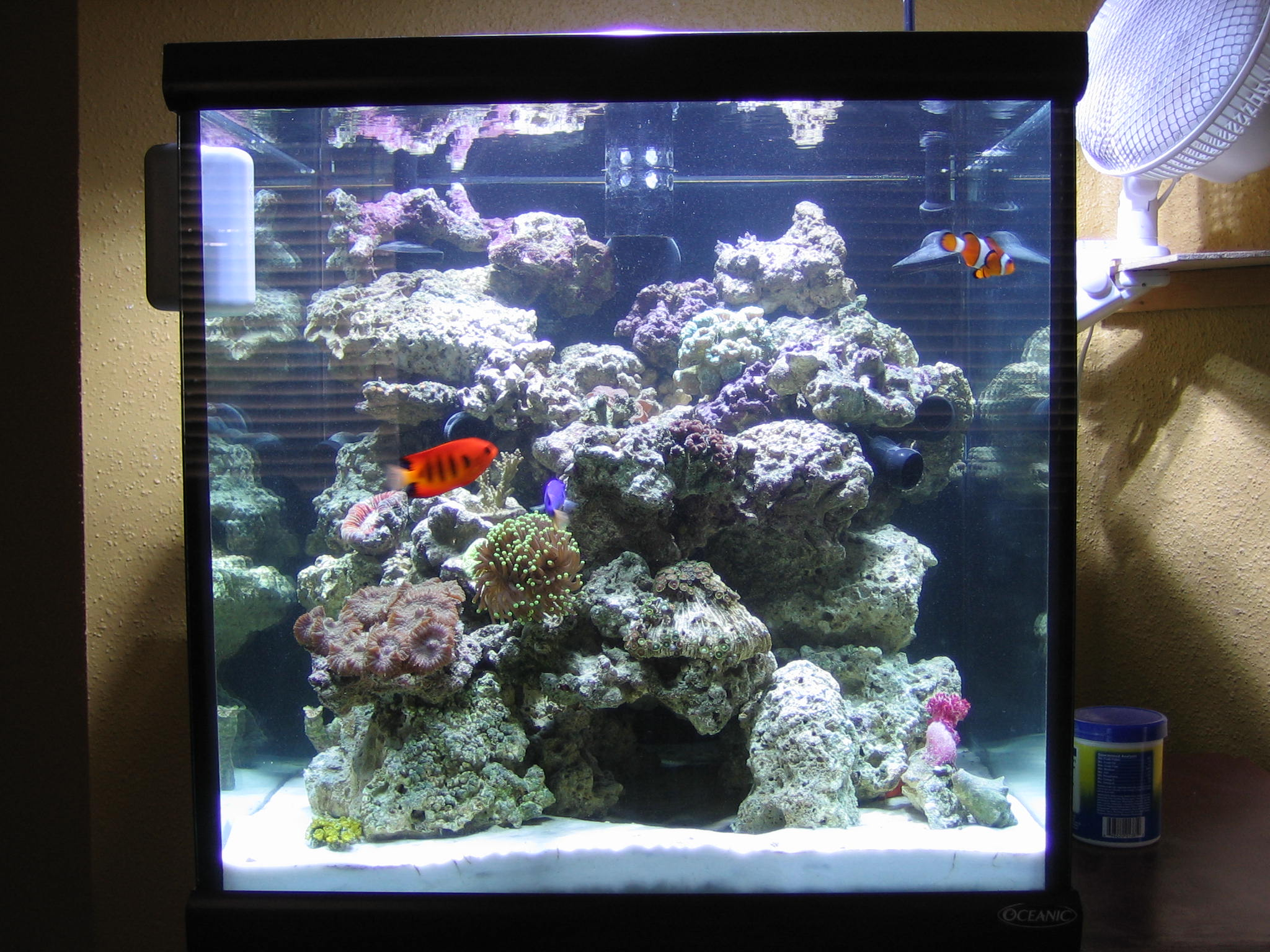 Aquascape Ideas Cube Reef Tank Aquascaping