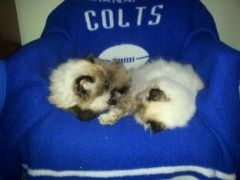 THE ONLY GOOD STUFF IS COLTS STUFF 004