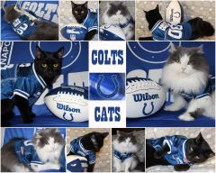 Colts Fun