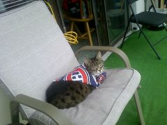 Indy,our Habs pet.