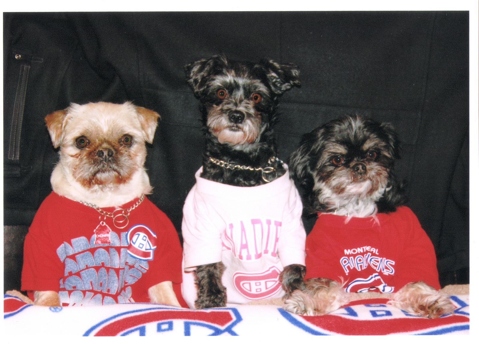 Habs Dogs In Regina