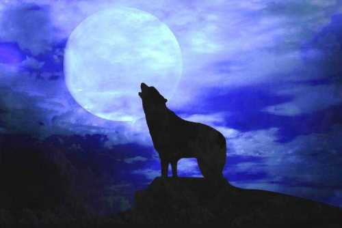 howl-at-the-moon-day-and-night-fun1.jpg