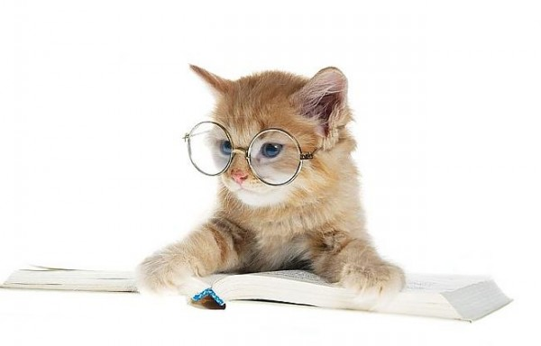 cat-reading-a-book-with-glasses-600x384.jpg