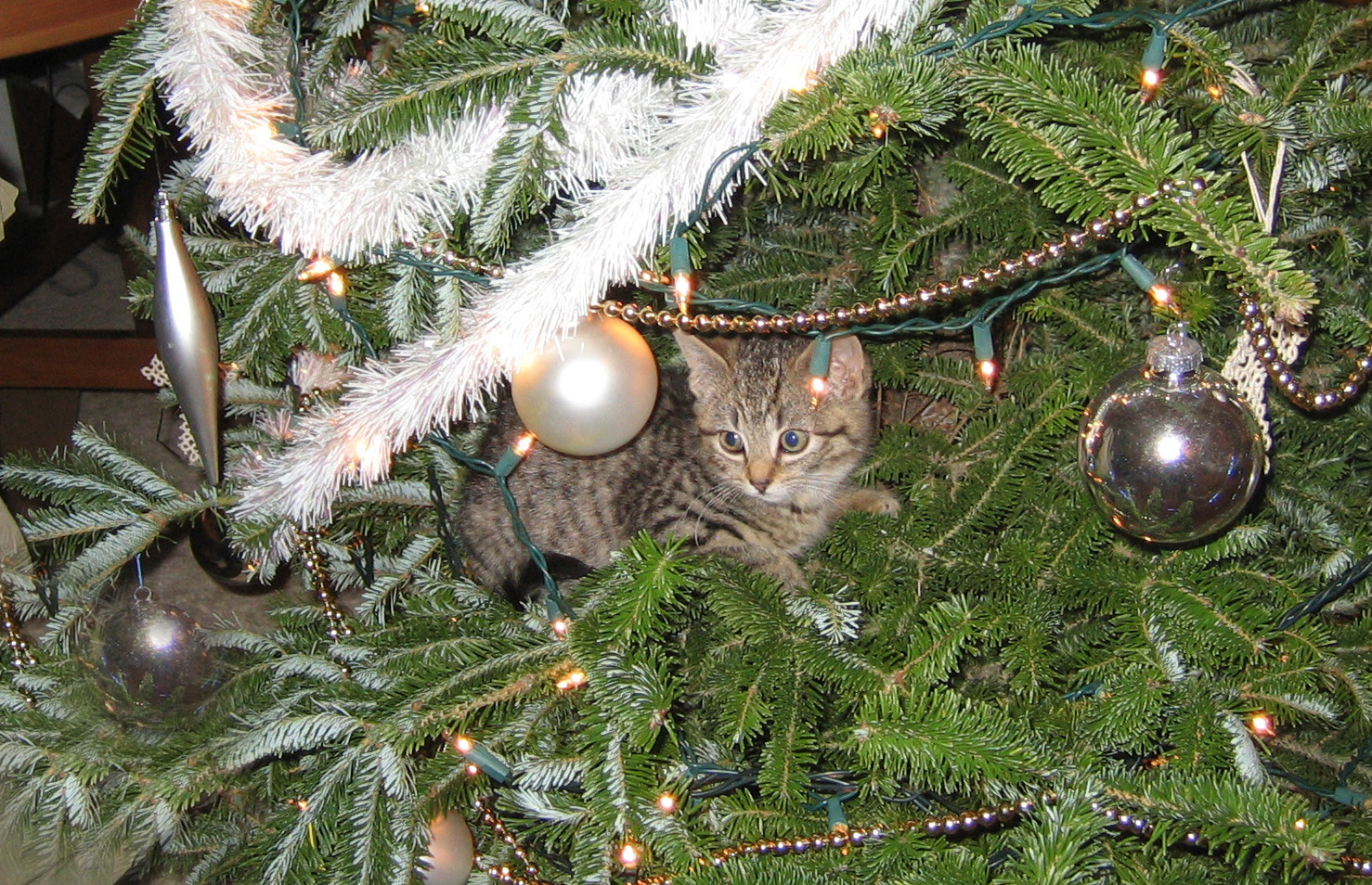 Dexter in the tree.jpg