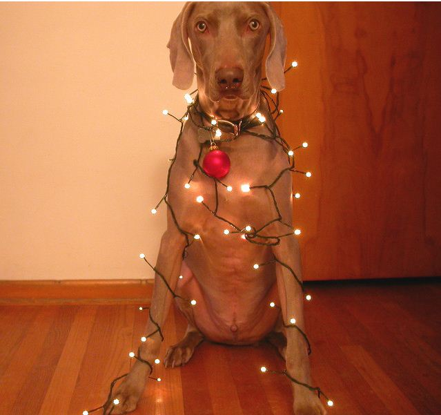 Putting up the Xmas Lights.jpg