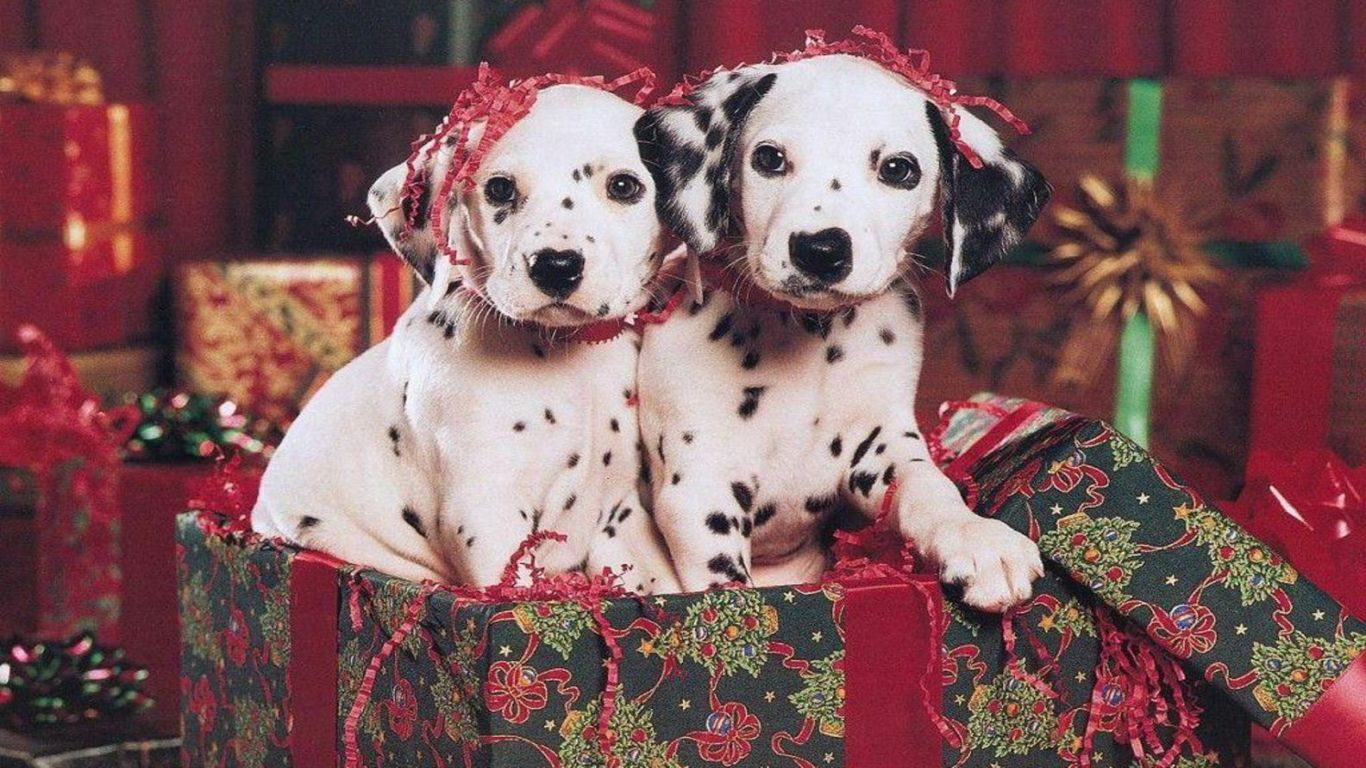 Christmas-Puppy-Wallpapers.jpg