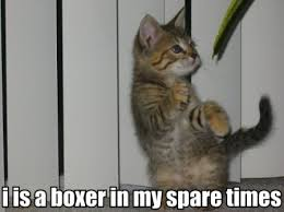 boxing cat.jpg