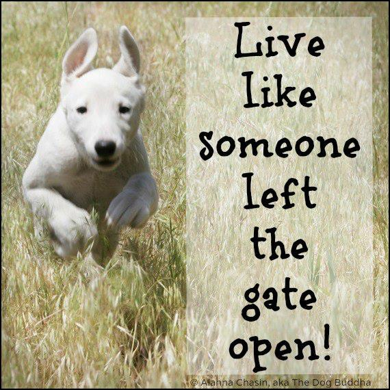 Live Like Someone Left the Gate Open.jpg