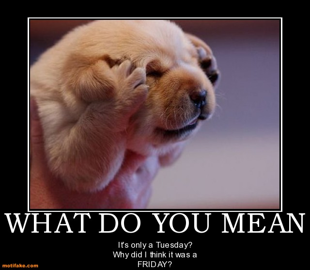 what-you-mean-friday-tuesday-funny-puppy-what-demotivational-posters-1343752986.jpg