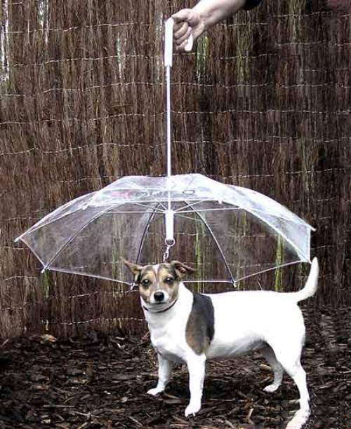 Dog-Umbrella.jpg