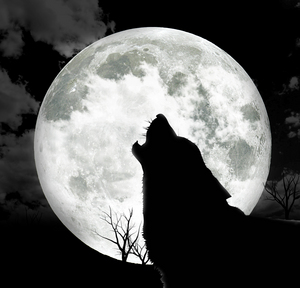 Howling at the Moon.jpg