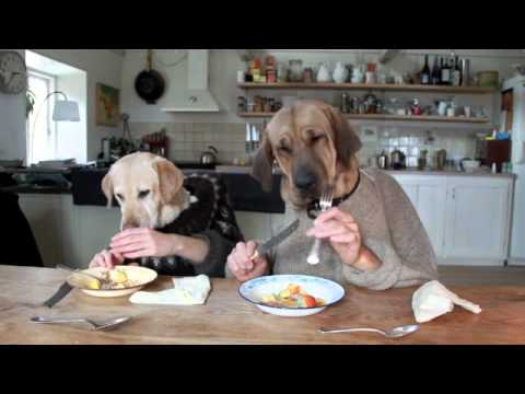 dogs eating breakfast.jpg