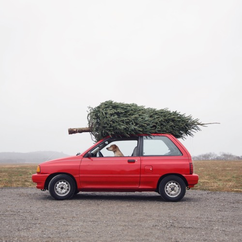 Bringing Home the Christmas Tree.jpg