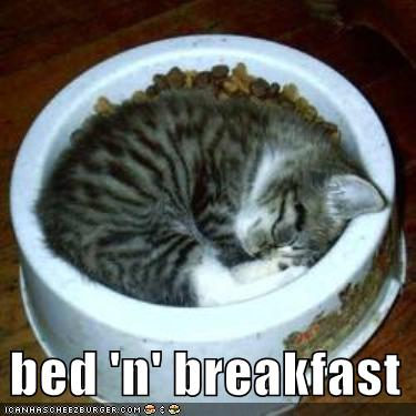 kitten-sleeps-food-bowl.jpg