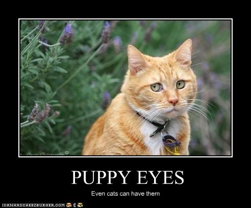 cat-has-puppy-eyes.jpg