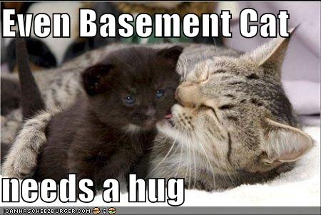 funny-pictures-even-basement-cat-needs-a-hug.jpg