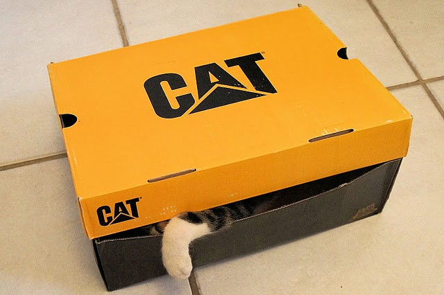 cat in this box.jpg