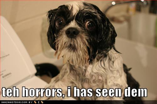 wet-dog-has-seen-horrors.jpg