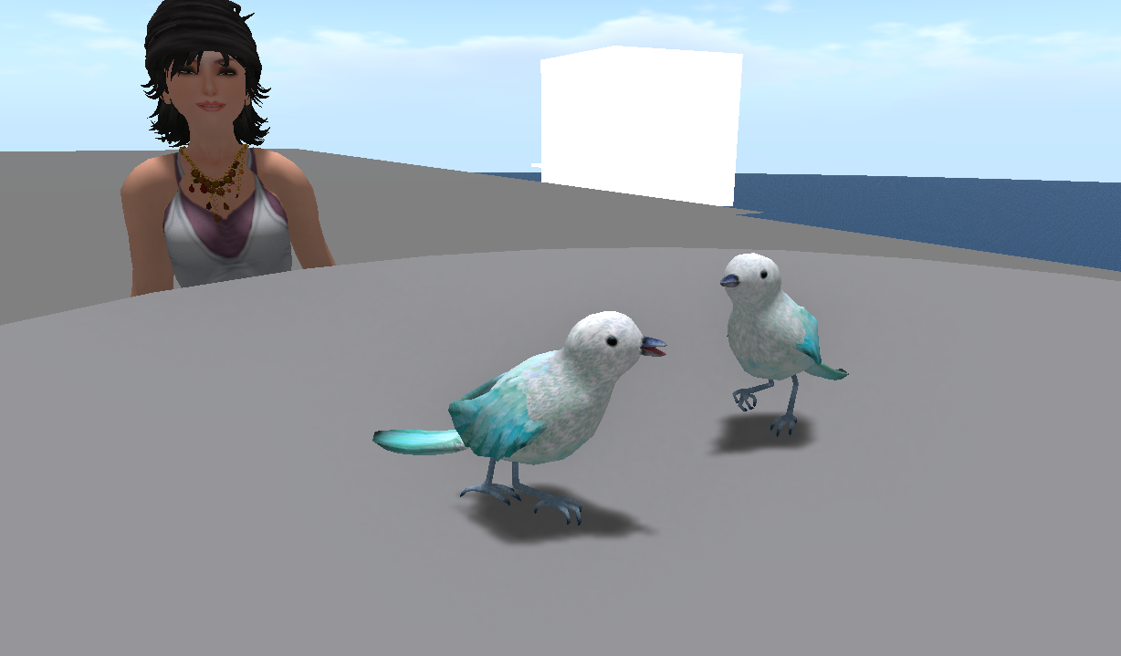 birdpic_001.png