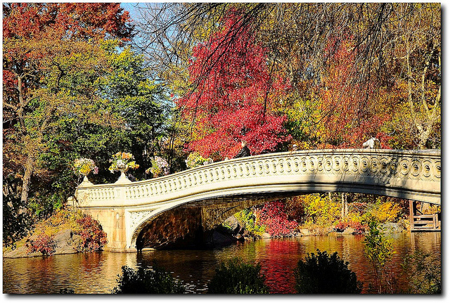 autumn-in-central-park.jpeg
