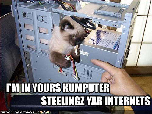 lolcat_internet.jpeg