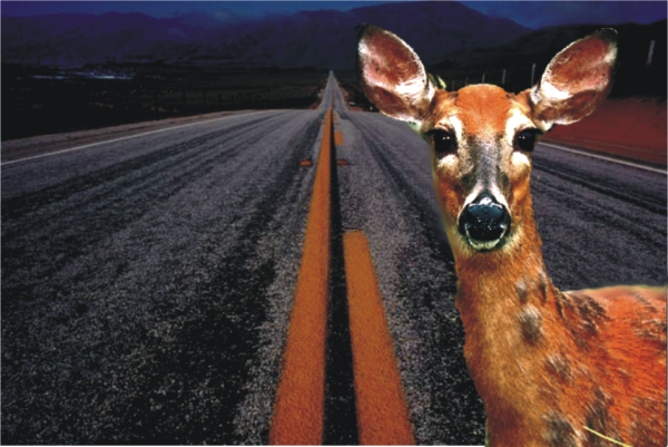 deer_headlights600.jpg