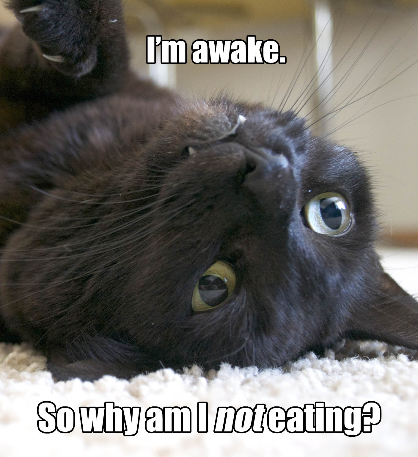 cat_inner_thoughts_im_awake_so_why_am_i_not_eating.jpg