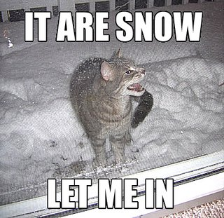 it_are_snow_cat.jpg