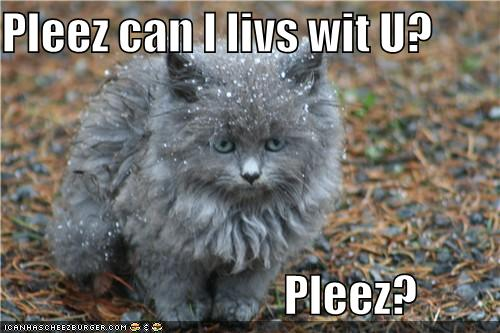 frozen-cat-wants-to-live-with-you.jpg