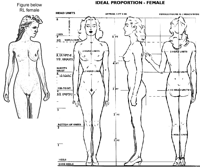 Ideal-female-proportions.jpg