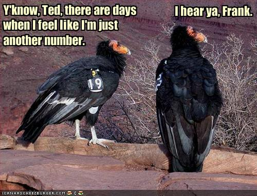 funny_pictures_vultures_feel_like_they_are_just_another_number.jpg