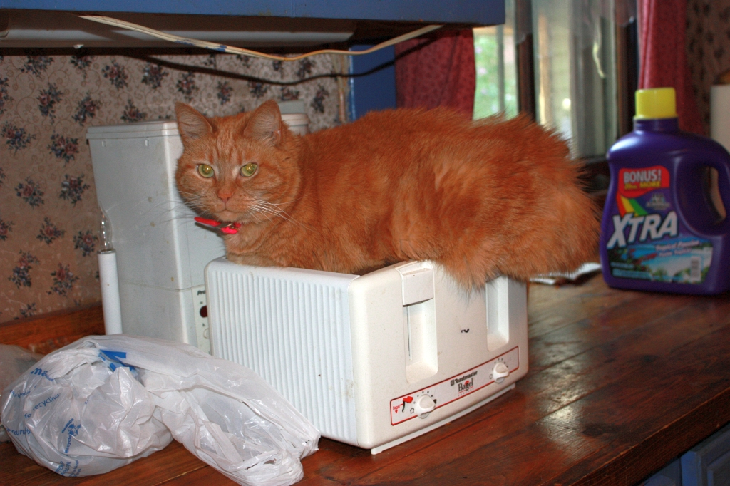 Toaster Kitty-04.jpg