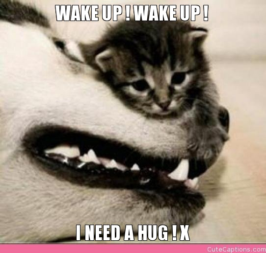wake-up-wake-up-i-need-a-hug-x.jpg.pagespeed.ic.CVW6W-RUvi.jpg