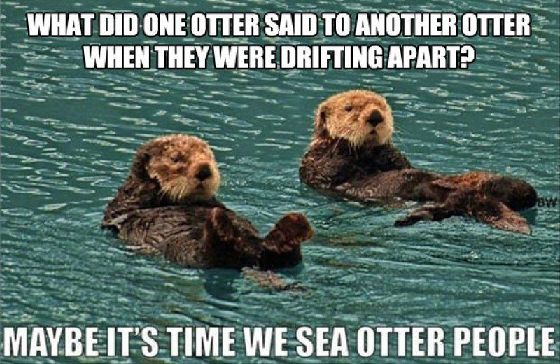 This-Funny-Sea-Otters-Joke01736814214715