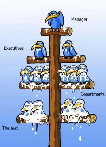 Image result for management hierarchy cartoon