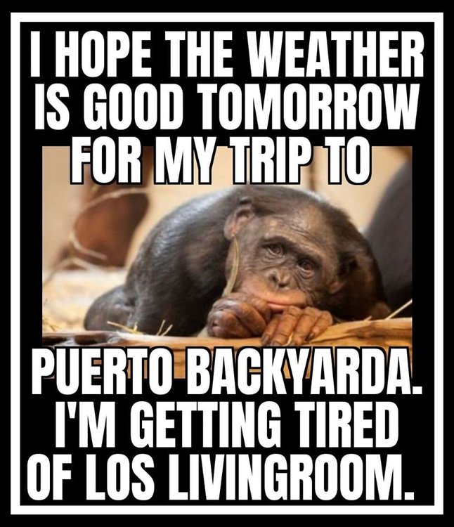 Image may contain: one or more people and meme, possible text that says 'I HOPE THE WEATHER IS GOOD TOMORROW FOR MY TRIP TO PUERTO BACKYARDA. I'M GETTING TIRED OF LOS LIVINGROOM.'