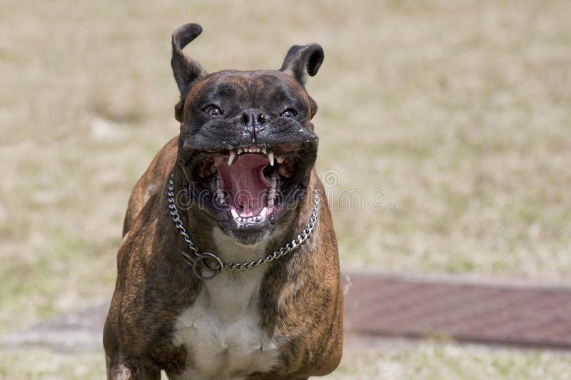 vicious-dog-running-you-30782476.jpg&f=1&nofb=1