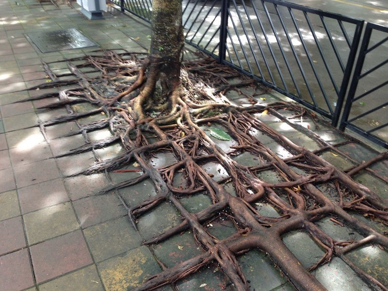 Image result for square tree root images
