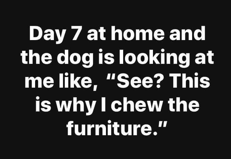 "Image may contain: possible text that says 'Day 7 at home and the dog is looking at me like, ""See? This is why I chew the furniture.""'"