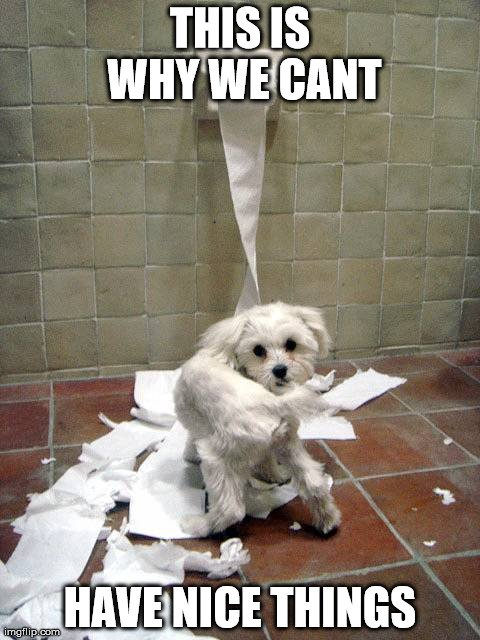 11 Dog Memes: This is Why We Can't Have Nice Things - Puppy Leaks