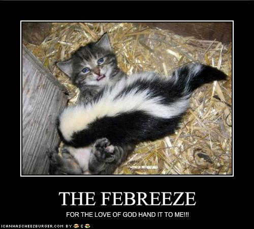 funny-pictures-kitten-begs-for-the-febreeze.jpg.a3d90057e6e7e5b07a133fed75504a0c.jpg