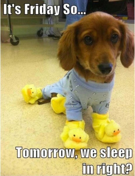 dog-humor-funny-its-friday-puppy-pajama.jpg
