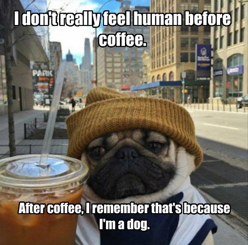 Coffee dog.jpg