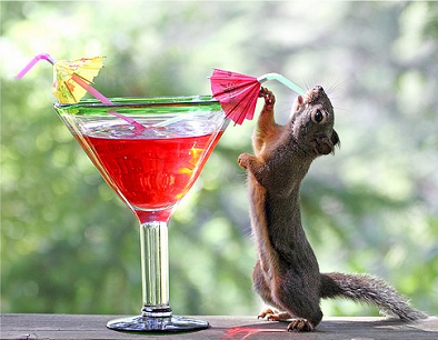 boozy_squirrel.png.38635be94a6042a9f674476e3661d675.png