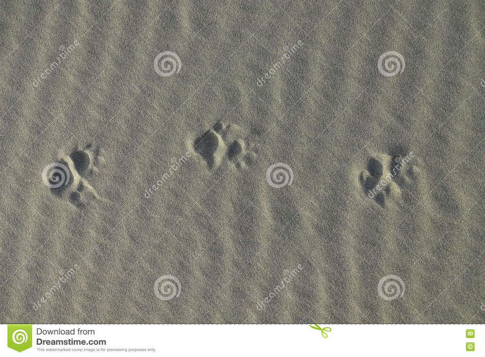 possum-tracks-light-sand-brushy-tailed-along-pacific-ocean-new-zealand-75396112.thumb.jpg.218fab2561df1cde15fdce632ef3dba6.jpg