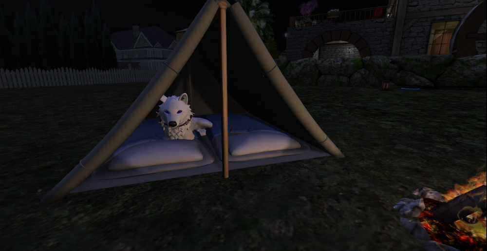 camping wolf_001.png