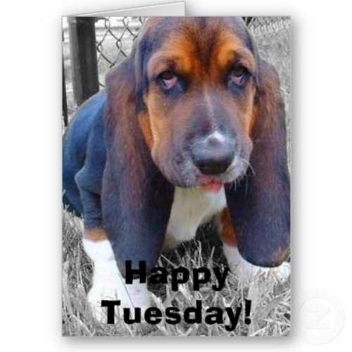 big_dog_happy_tuesday_7170750629.0.jpg