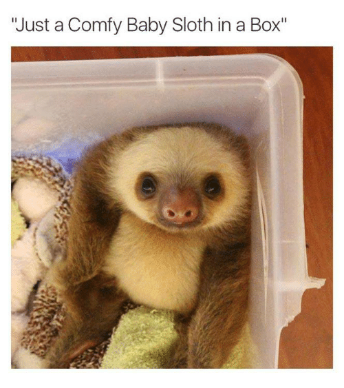 just-a-comfy-baby-sloth-in-a-box-3090428.png.784bb55dc66bb3ba7d5ce5da022330d8.png
