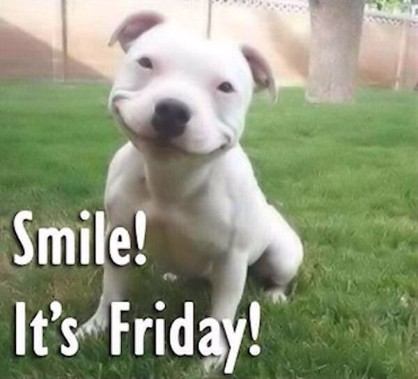212447-Cute-Dog-Smiling-Cause-Its-Friday.jpg