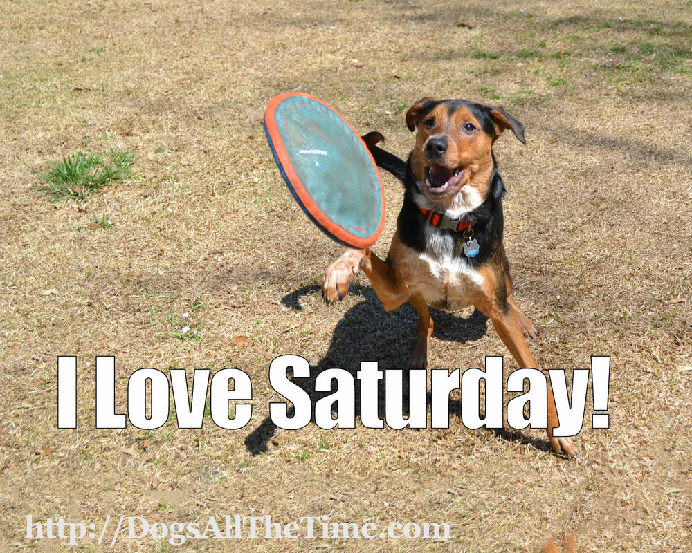 I-Love-Saturday-frisbee-and-dog-372632_1920-publicdomain-pixabay.jpg